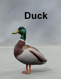 Mostdigitalcreations-Duck.png