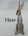 Corvus-Hare.png
