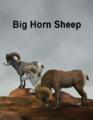 LynesCreations-BigHorn.png