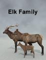 LynesCreations-Elk.png