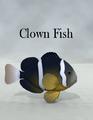 ToruMiyazawa-ClownFish.png