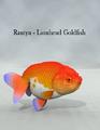 ToruMiyazawa-Rantyu-LionheadGoldfish.png